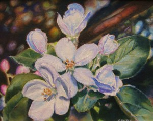Apple Blossoms, 8x10in, Oil on Canvas